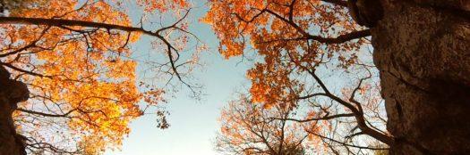 cropped-cropped-lynnwoods-1.jpg