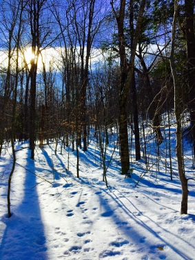 Low Sun and Powdered Glades